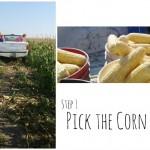 corn s1