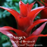 free printable St. Therese Prayer Printable