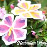 felt hawaiian flowers with free template